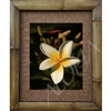 """Big Daddy"" Plumeria Art Print. Beautiful  photogrpah of a Plumeria flower matted in a Natural Grass Mat and framed in a handmade Natural Bamboo Frame. Bamboo Frame is hand sanded and stained twice. Made in California, USA. Dimensions; Print 11"" x..."
