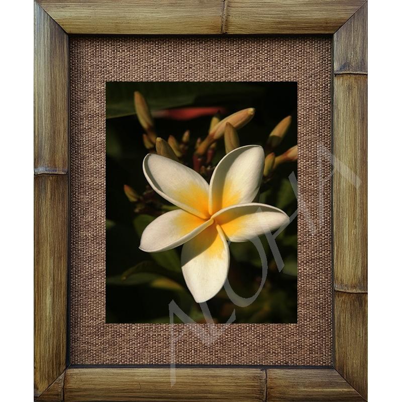 big daddy plumeria floral photograph bamboo framed art print