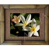 """Plumeria Family"" Plumeria Art Print. Beautiful  photogrpah of  Plumeria's, showing Father, Mother, junior and baby bud. Matted in a Natural Grass Mat and framed in a handmade Natural Bamboo Frame. Bamboo Frame is hand sanded and stained twice. Made..."