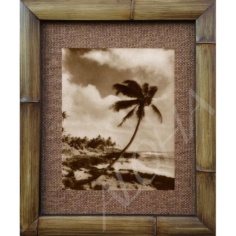 lonely palm antique vintage hawaiian island 1900s sepia photograph