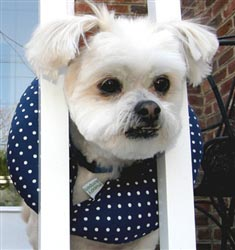 "Puppy Bumper -Blue - Small (up to 10"" neck)"
