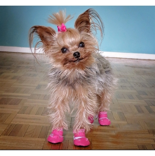 Small Dog Booties - Mini Meshies by Barko Booties - Pink ... aa482c6ace1e