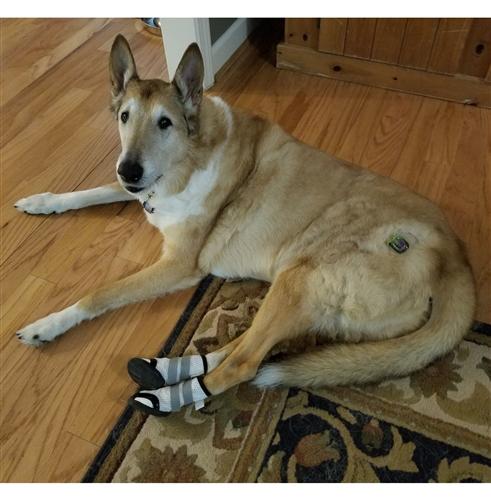 Sporthos Dog Boots For Orthopedic Medical Indoor