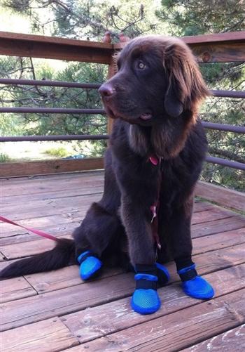 Summer Amp Indoor Dog Booties Meshies By Barko Booties