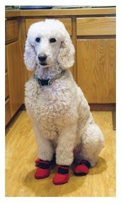 Dog Booties Meshies By Barko