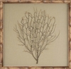 framed wall art natural bamboo sea fan khaki linen