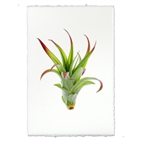 green air plant photography print organic