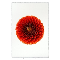 Designer Ali Oop Wall Art - USA Made Professional Floral Photography | BSEID