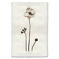 Black White Anemone Flower Photography on Handmade Paper