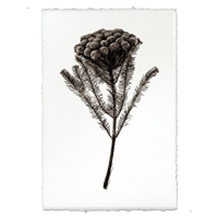 photography brunia plant weed handmade paper