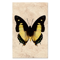 black yellow butterfly paper art print frame