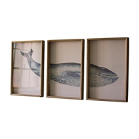 triptych framed humpback whale wall art