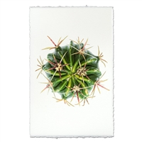 cactus photography print green organic