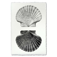 photography art blue handmade paper scallop shells two