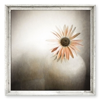 Orange Daisy Framed Art (size + frame options)