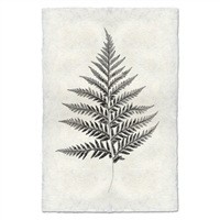 Designer Fern Study #10 Wall Art - USA Made Professional Photography | BSEID