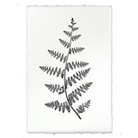 Designer Fern Study #2 Wall Art - USA Made Professional Photography | BSEID