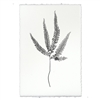 Designer Fern Study #3 Wall Art - USA Made Professional Photography | BSEID