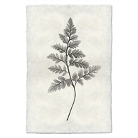 Designer Fern Study #6 Wall Art - USA Made Professional Photography | BSEID