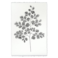 Designer Fern Study #7 Wall Art - USA Made Professional Photography | BSEID
