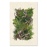 oversized photography art forest fern framed art