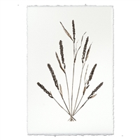 photography grain plant weed handmade paper