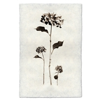 Black White Hydrangeas Flower Photography on Handmade Paper