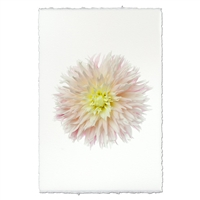 photography flower pink yellow handmade paper