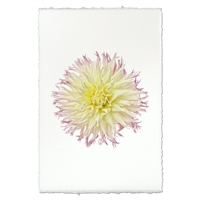 photography flower white yellow purple handmade paper