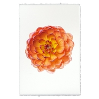 photography flower orange yellow handmade paper