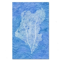 paper print wall art sea fan coral nautical framed