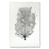 photography art blue handmade paper sea fan
