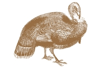 brown turkey paper placemat