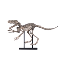 Dinosaur Skeleton on Base (Faux)