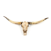 Resin Texas Longhorn Skull - Wall Hung