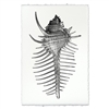 photography art blue handmade spiny murex seashell