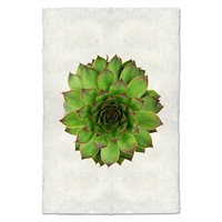photography handmade paper green succulent plant