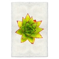 photography handmade paper green red succulent plant