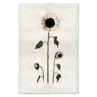 Black White Sunflowers Photography on Handmade Paper
