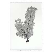 Tall Sea Fan Wall Art - USA Made Professional Sea Life Photography | BSEID