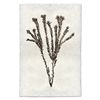 photography tortum plant weed handmade paper