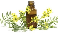 Litsea Cubeba Essential Oil (May Chang)