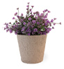 Purple Bell Fern in Paper Pot