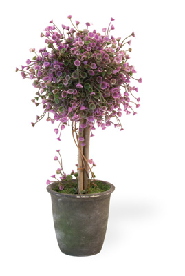 Purple Bell Topiary in Black Pot