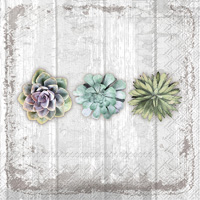 Succulents Still Life Lunch Napkins