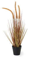 Dogtail Amber Small Grass