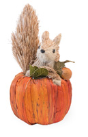 Benny Squirrel in Pumpkin