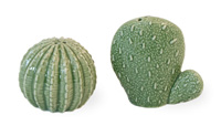 Prickly Cactus Salt & Pepper Set