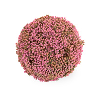 Pink Floral Mulberry Ball