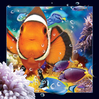 4D Video Card Clownfish